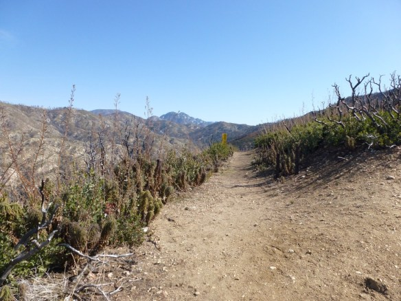 Silver Moccasin Trail at Shortcut Saddle.