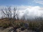 San_Gabriel_Peak_157