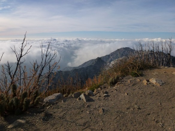 View from San Gabriel Peak above the clouds looking west