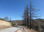 Road From Angeles Crest Highway to JCT Silver Moccasin Trail.