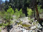 Silver Moccasin Trail (03-30-2014)