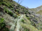 Silver Moccasin Trail (04-29-2012)