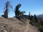 PCT: Mt. Baden Powell to JCT Dawson Saddle (7-13-2011)