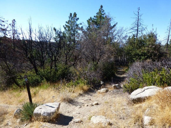 Junction for PCT and Mt. Waterman trails across Angeles Crest highway.