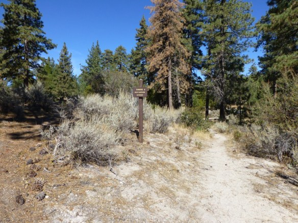View of Bandito Campground as seen coming up the Silver Moccasin Trail from the JCT to Horse Flats