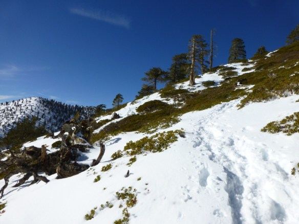 One of the steeper portions of the Baldy Bowl Trail.