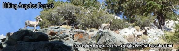 cropped-threebighorn_hdr1.jpg