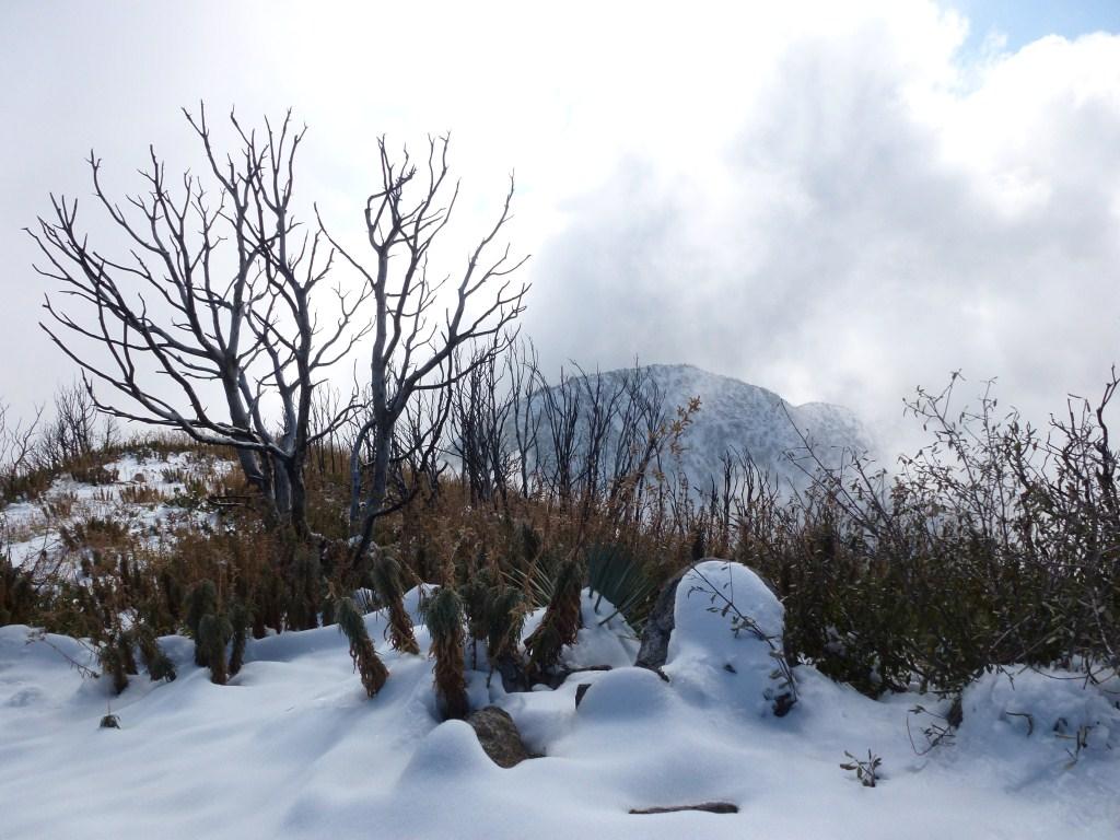 towards the snowy - photo #28