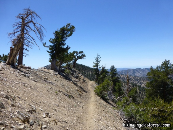 Pacific Crest Trail between Mt. Baden-Powell and Mt. Burnham.