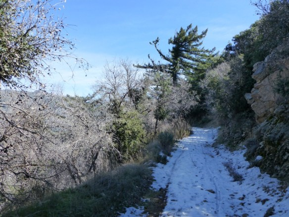 View along the One Man & Mule Railway Trail.