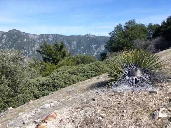 View toward Mt. Wilson from the Muir Peak Trail.