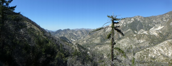 View down Bear Canyon near Tom Sloan Saddle. (click to enlarge).