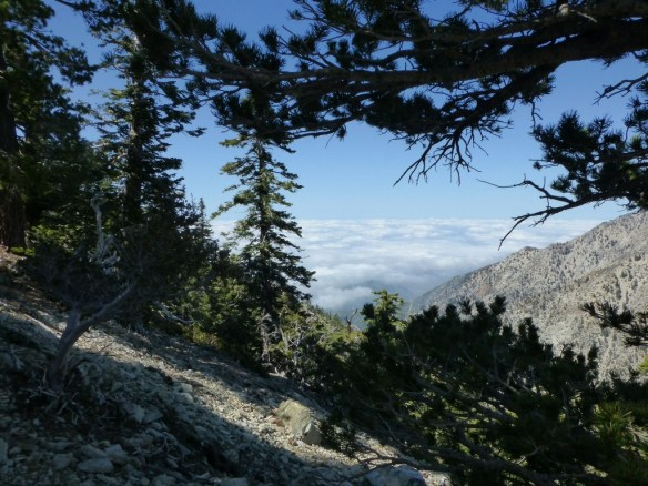 View toward the clouds from the Cucamonga Peak Trail.