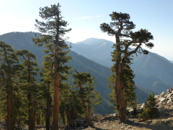 Last view of Mt. San Gorgonio  in August 2012 (East San Bernardino Peak to the left)