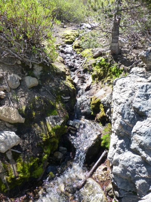 Water flow of Limber Pine Springs (June 2, 2013)