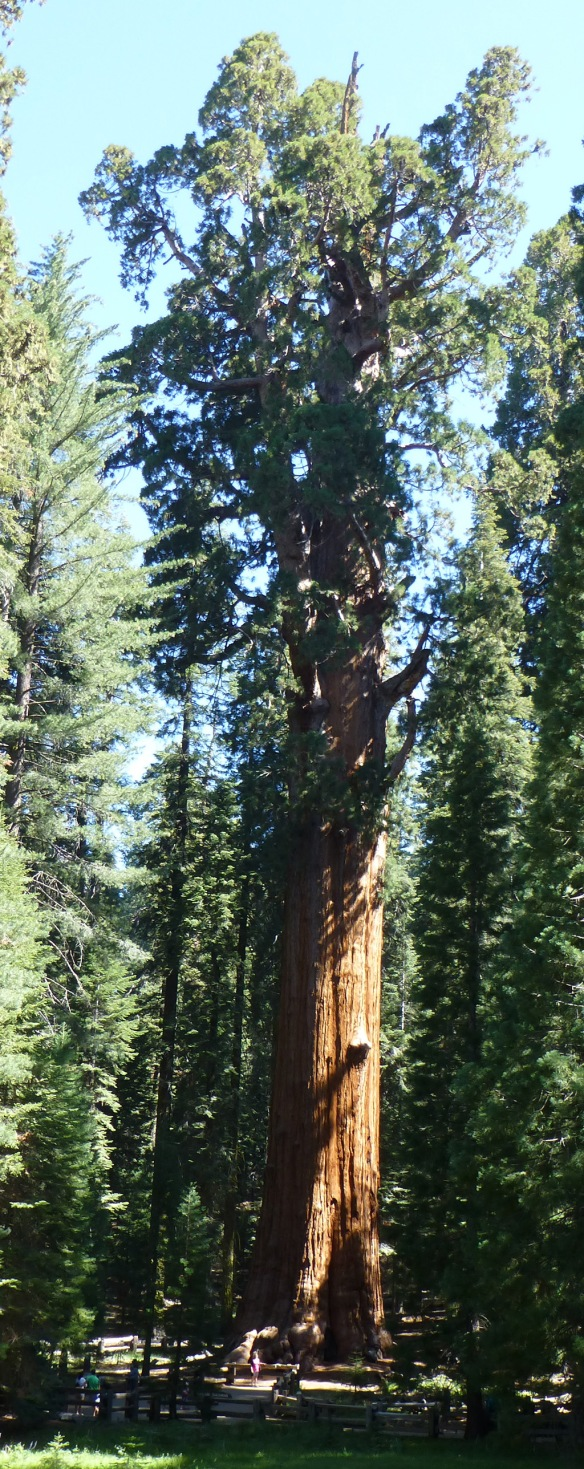 General Sherman Tree (notice the people at its base)