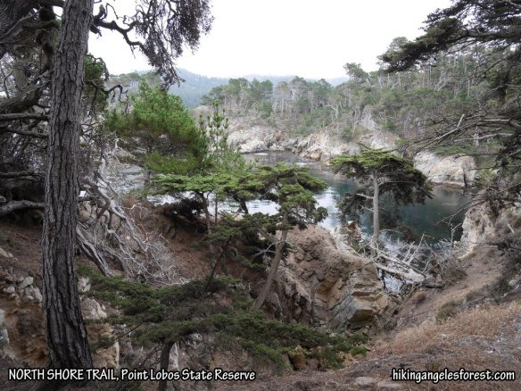 North Shore Trail, Point Lobos State Reserve.