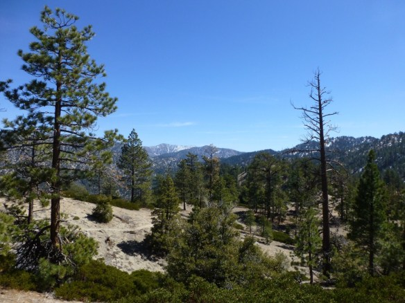 Pacific Crest Trail between Cloudburst Summit and Cooper Canyon Campground (5.2 miles, 1,400' gain).