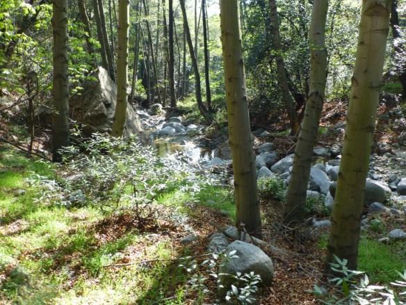 Idlehour Trail (16.2 miles, 4,849' gain).