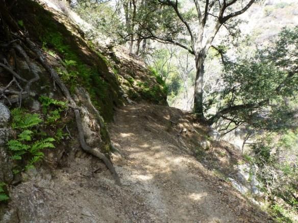 Mt. Wilson Trail (14 miles, 4,750' gain)