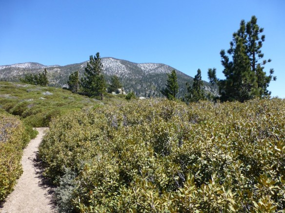 View from the plateau area of the San Bernardino Peak Divide Trail west of Manzanita Springs.