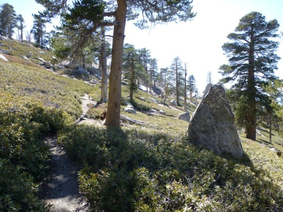 San Bernardino Peak Divide Trail between Manzanita Springs and Limber Pine Bench.