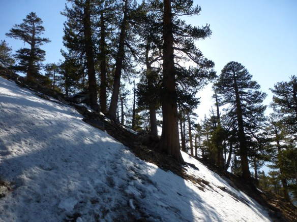 Snow on the trail just above Limber Pine Springs.