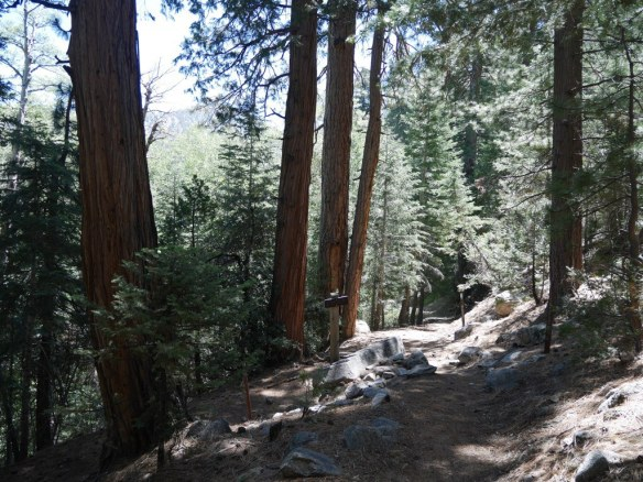 JCT Cooper Canyon Trail and Burkhart Trail as seen heading down from Buckhorn Campground.