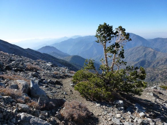 North Backbone Trail coming down from Mt. Baldy, October 2011