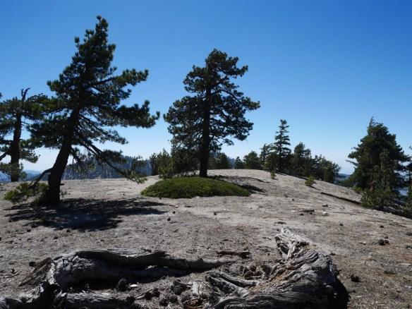 Pallett Mountain, June 2014.
