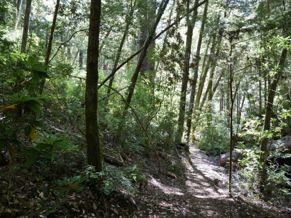 Emerald Ridge Trail, Redwood National Park