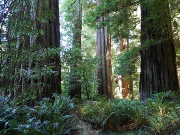 Inner loop of Tall Trees Grove
