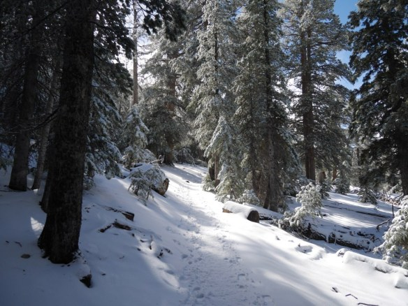 One of the few flatter areas of this section of the PCT provides a good place to make gear changes.