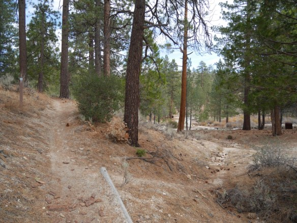 First view of the Chilao picnic area. The trail continues left. Note trail sign in middle left of photo.