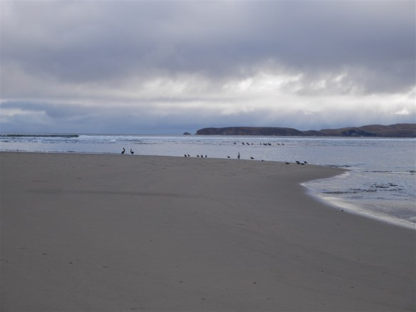 The end of Limantour Spit