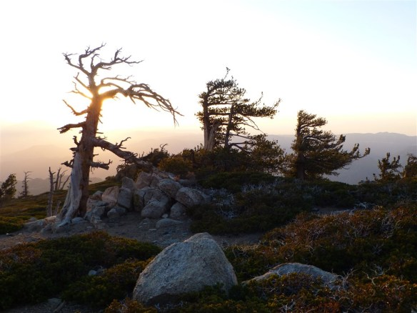 Late afternoon at Limber Pine Bench