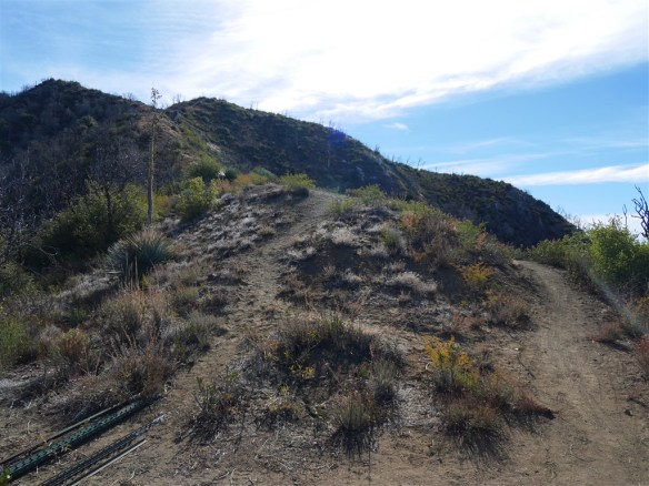 View from Strawberry Saddle. Trail at left leads to Mt. Lawlor. Trail at right is the South Strawberry Saddle Trail leading to Red Box.