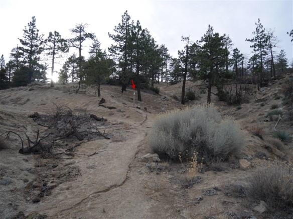 Use trail crossing as seen coming down from the gate.