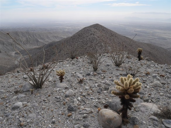 View from an unnamed peak with Smoke Tree Canyon visible on the left. Dry teddy-bear cholla cactus and ocotillo stand out in the landscape.