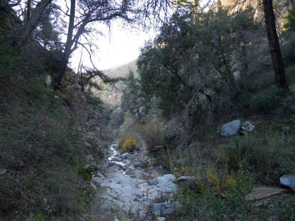 Lower portion of the South Colby Canyon Trail. Water is seasonal.