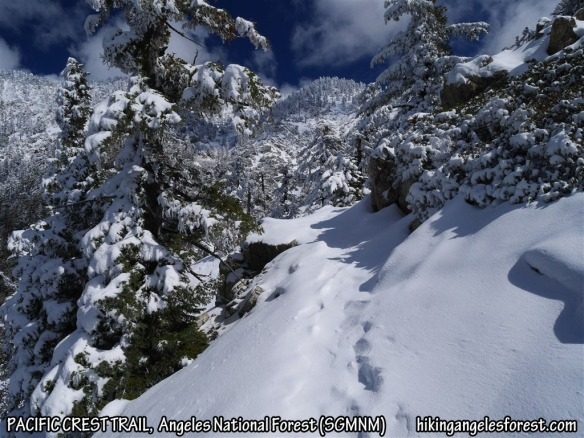 Pacific Crest Trail between mile marker 62.60 and the junction at Pleasant View Ridge.