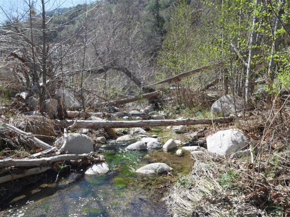 One of the many areas along the stream obstructed with fallen trees and other debris from the Station Fire of 2009.