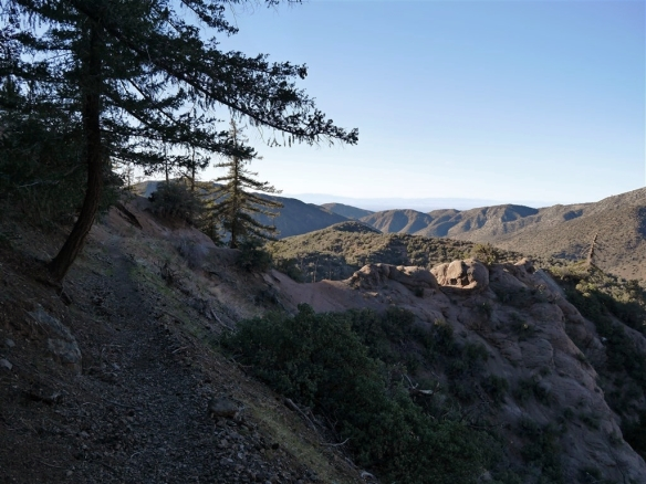 My favorite Angeles National Forest hike this month (#21) was the Manzanita Trail between South Fork and Vincent Gap.