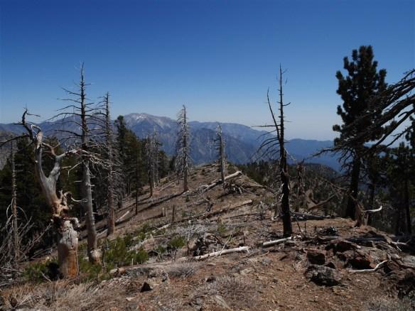 View looking down Copter Ridge near Mt. Hawkins.