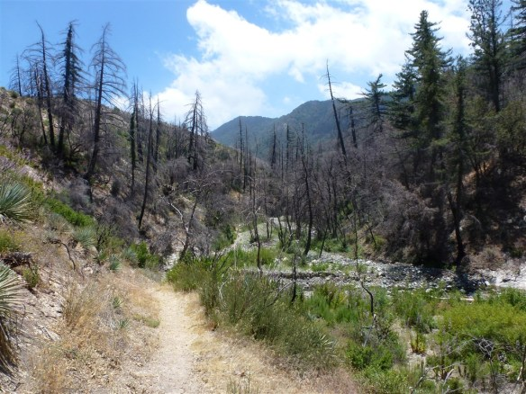 View down Shortcut Canyon on June 29, 2011