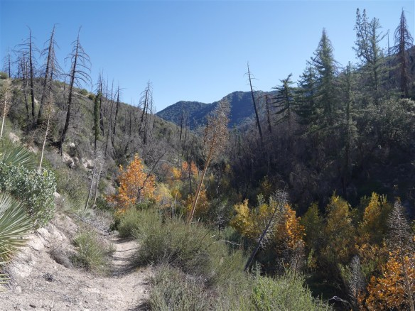 View down Shortcut Canyon from November 22, 2015.
