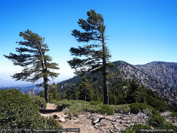 Pacific Crest Trail looking toward Mt. Burnham and Mt. Baden-Powell.