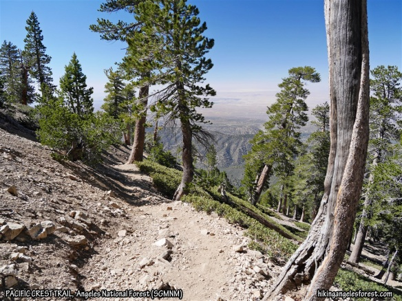 Pacific Crest Trail between Mt. Baden-Powell and Vincent Gap