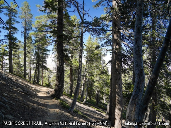 Pacific Crest Trail heading toward Vincent Gap from Mt. Baden-Powell