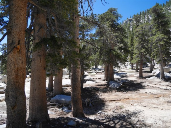 View between Wellman Divide and Mt. San Jacinto.